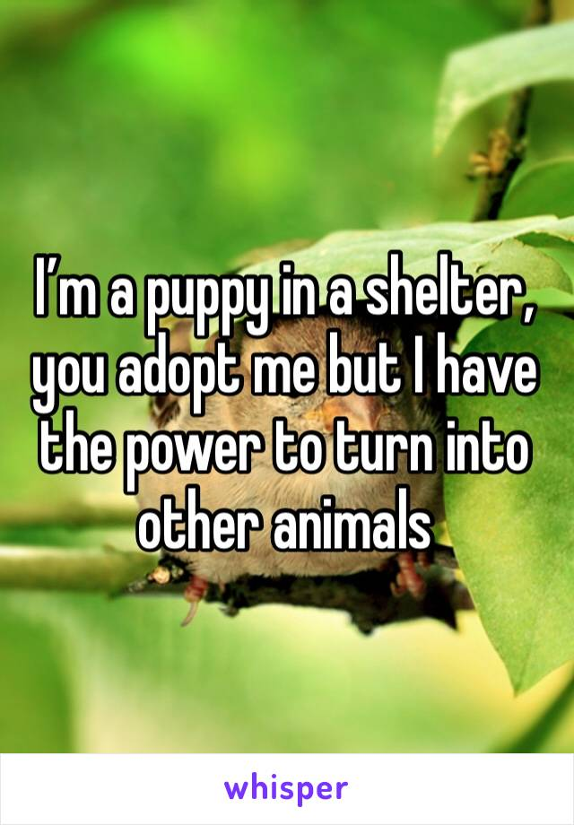 I'm a puppy in a shelter, you adopt me but I have the power to turn into other animals
