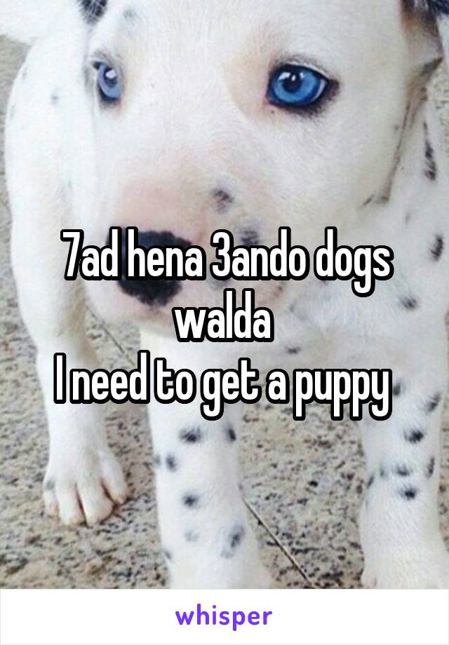 7ad hena 3ando dogs walda  I need to get a puppy
