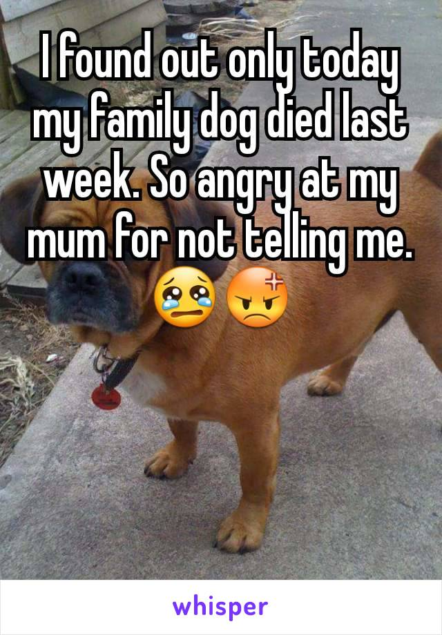 I found out only today my family dog died last week. So angry at my mum for not telling me. 😢😡