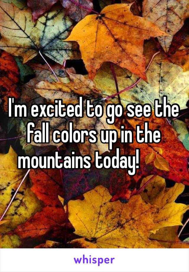 I'm excited to go see the fall colors up in the mountains today! 🍂