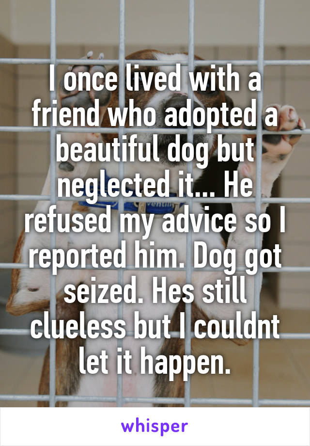 I once lived with a friend who adopted a beautiful dog but neglected it... He refused my advice so I reported him. Dog got seized. Hes still clueless but I couldnt let it happen.