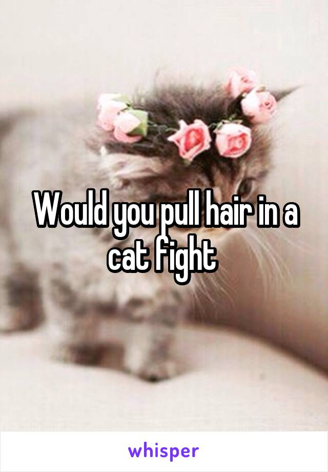 Would you pull hair in a cat fight