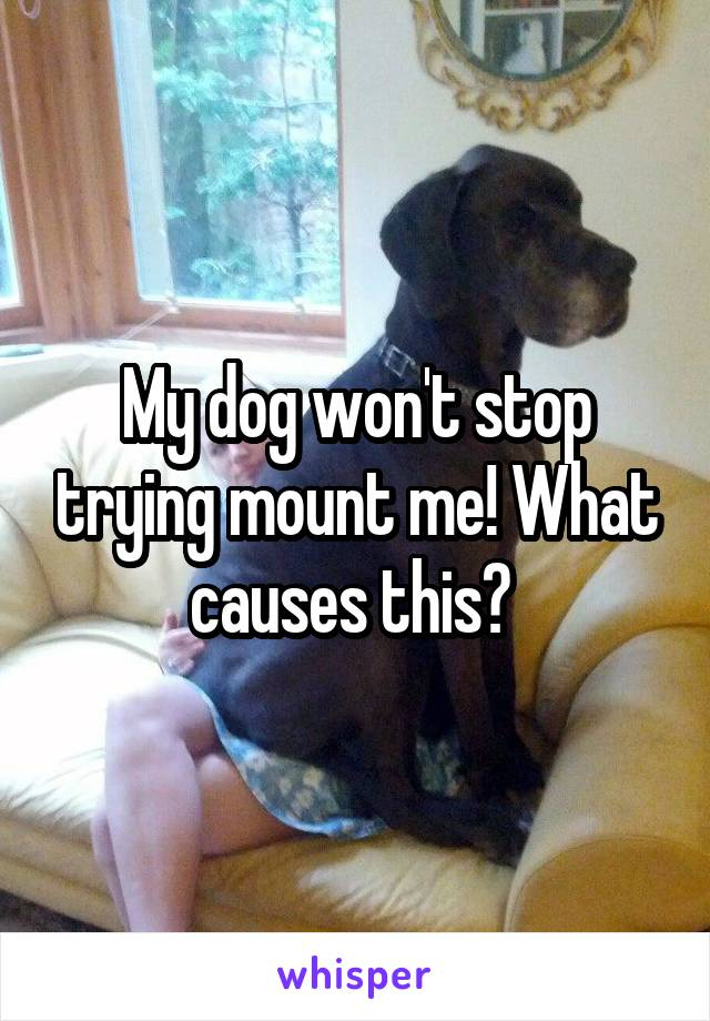 My dog won't stop trying mount me! What causes this?