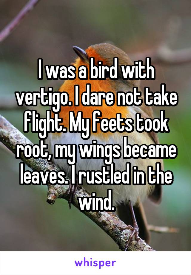 I was a bird with vertigo. I dare not take flight. My feets took root, my wings became leaves. I rustled in the wind.