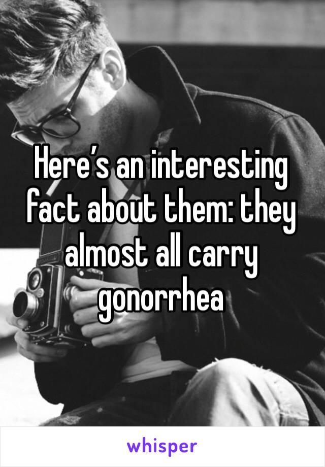 Here's an interesting fact about them: they almost all carry gonorrhea