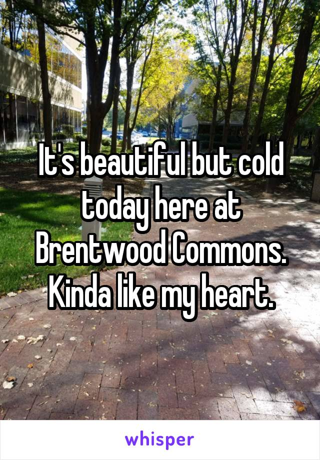 It's beautiful but cold today here at Brentwood Commons. Kinda like my heart.