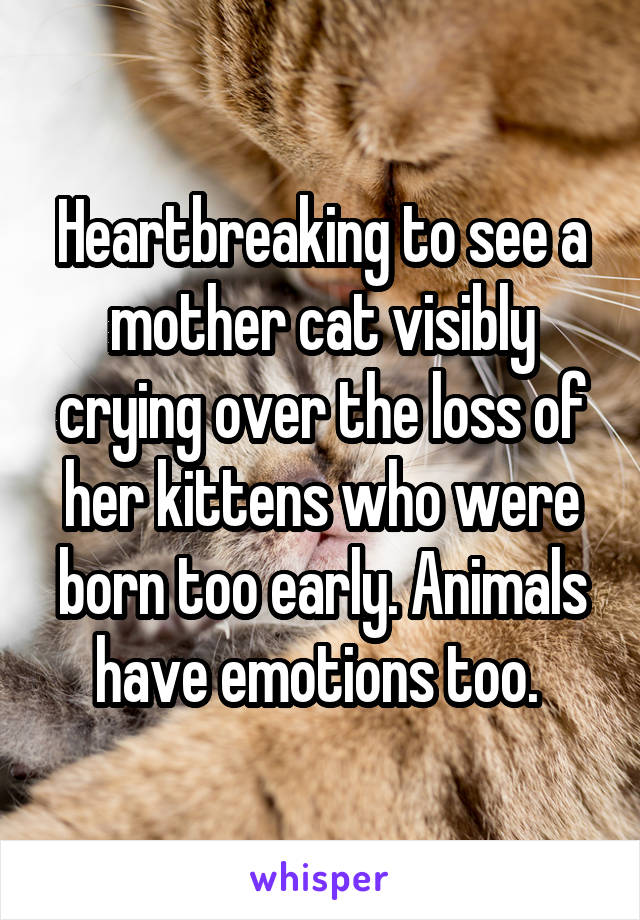 Heartbreaking to see a mother cat visibly crying over the loss of her kittens who were born too early. Animals have emotions too.