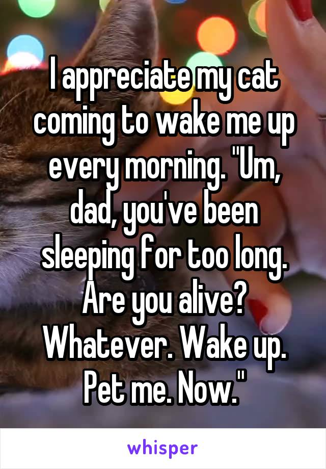 """I appreciate my cat coming to wake me up every morning. """"Um, dad, you've been sleeping for too long. Are you alive? Whatever. Wake up. Pet me. Now."""""""