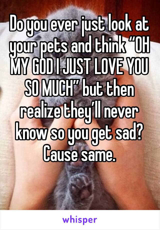 """Do you ever just look at your pets and think """"OH MY GOD I JUST LOVE YOU SO MUCH"""" but then realize they'll never know so you get sad? Cause same."""