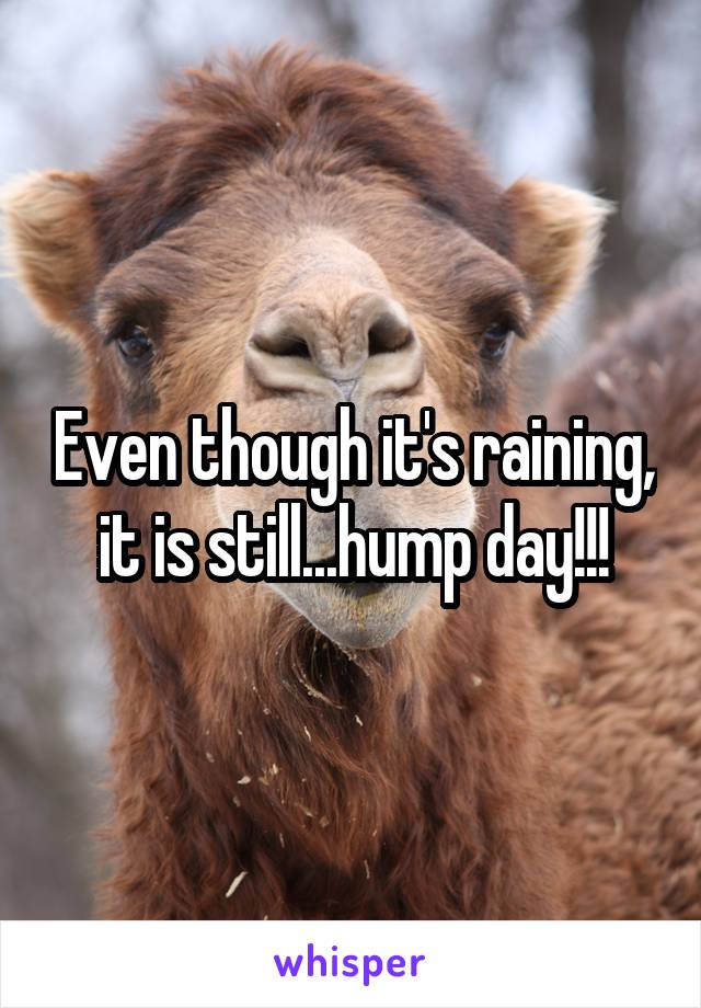 Even though it's raining, it is still...hump day!!!