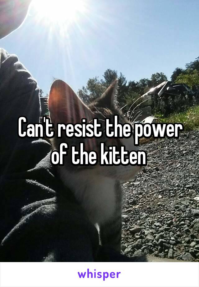 Can't resist the power of the kitten