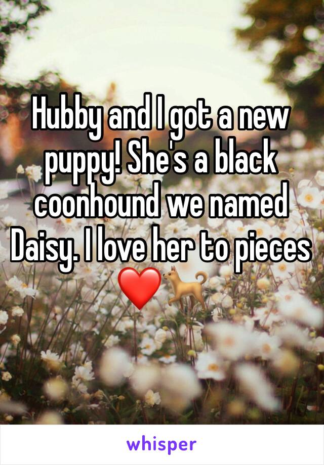 Hubby and I got a new puppy! She's a black coonhound we named Daisy. I love her to pieces❤️🐕