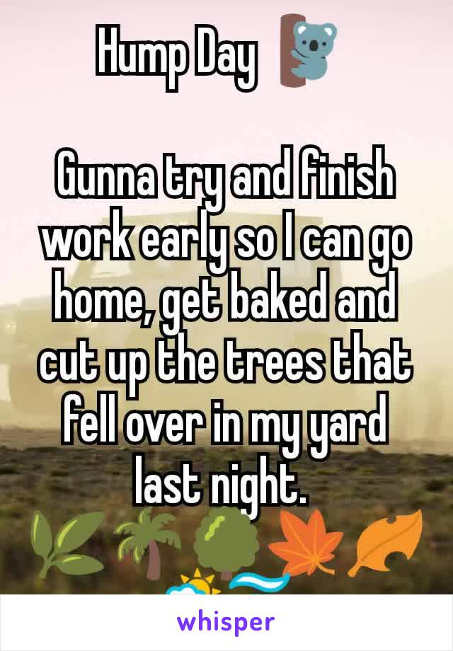 Hump Day 🐨   Gunna try and finish work early so I can go home, get baked and cut up the trees that fell over in my yard last night.  🌿🌴🌳🍁🍂🌦️🌫️