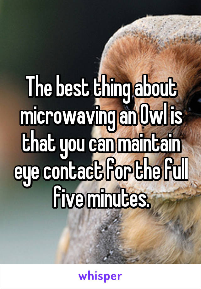 The best thing about microwaving an Owl is that you can maintain eye contact for the full five minutes.