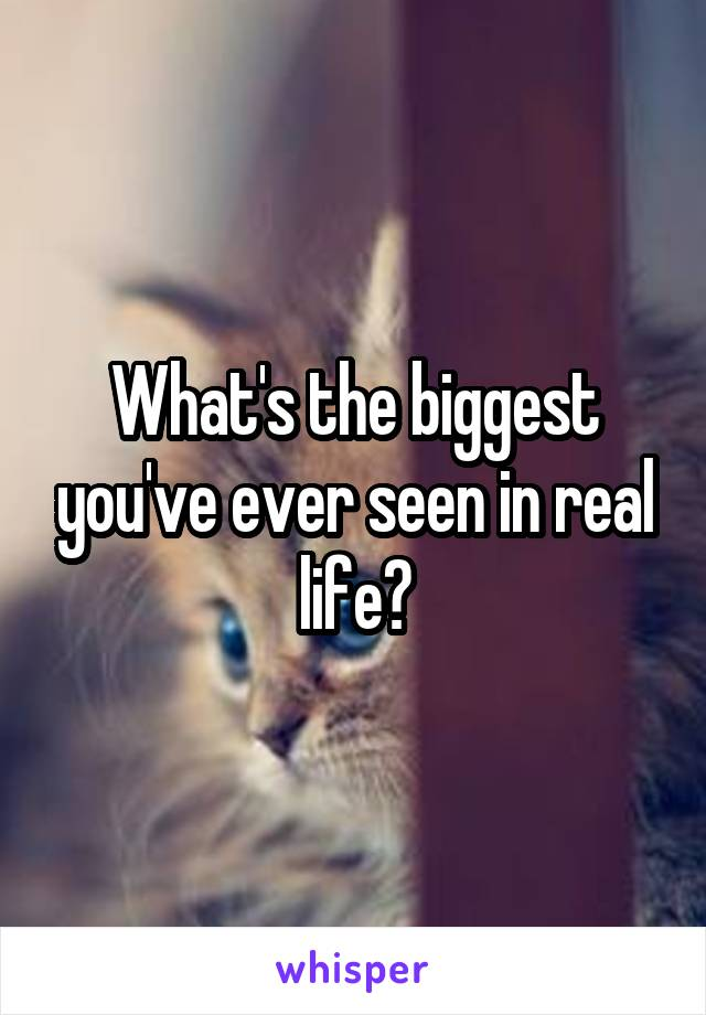 What's the biggest you've ever seen in real life?