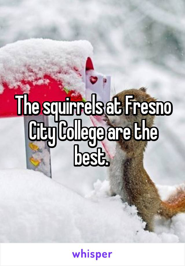The squirrels at Fresno City College are the best.