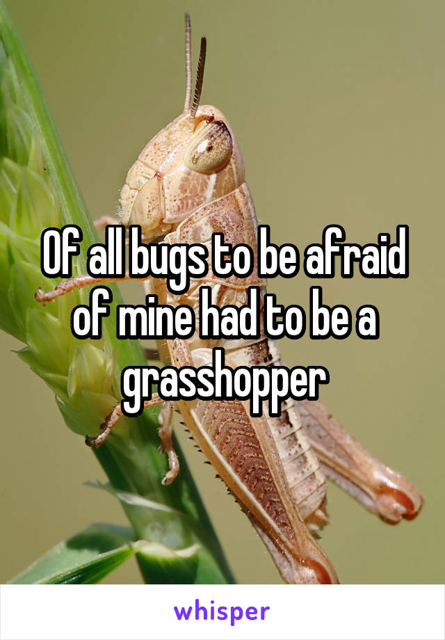 Of all bugs to be afraid of mine had to be a grasshopper