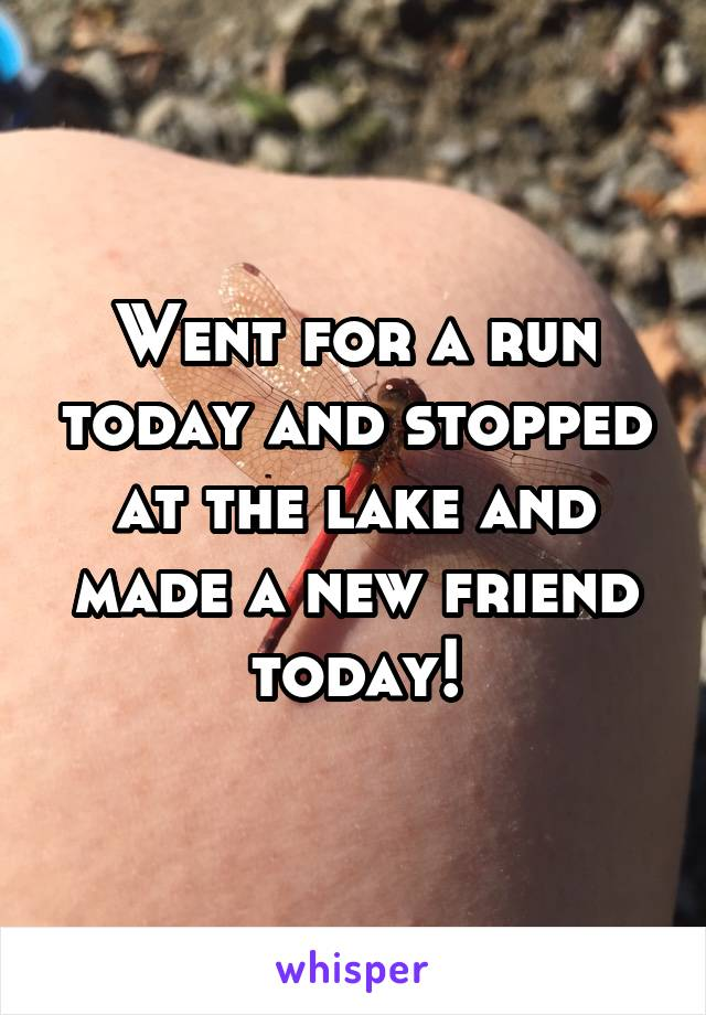 Went for a run today and stopped at the lake and made a new friend today!