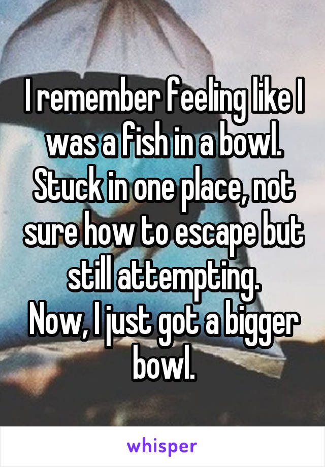 I remember feeling like I was a fish in a bowl. Stuck in one place, not sure how to escape but still attempting. Now, I just got a bigger bowl.