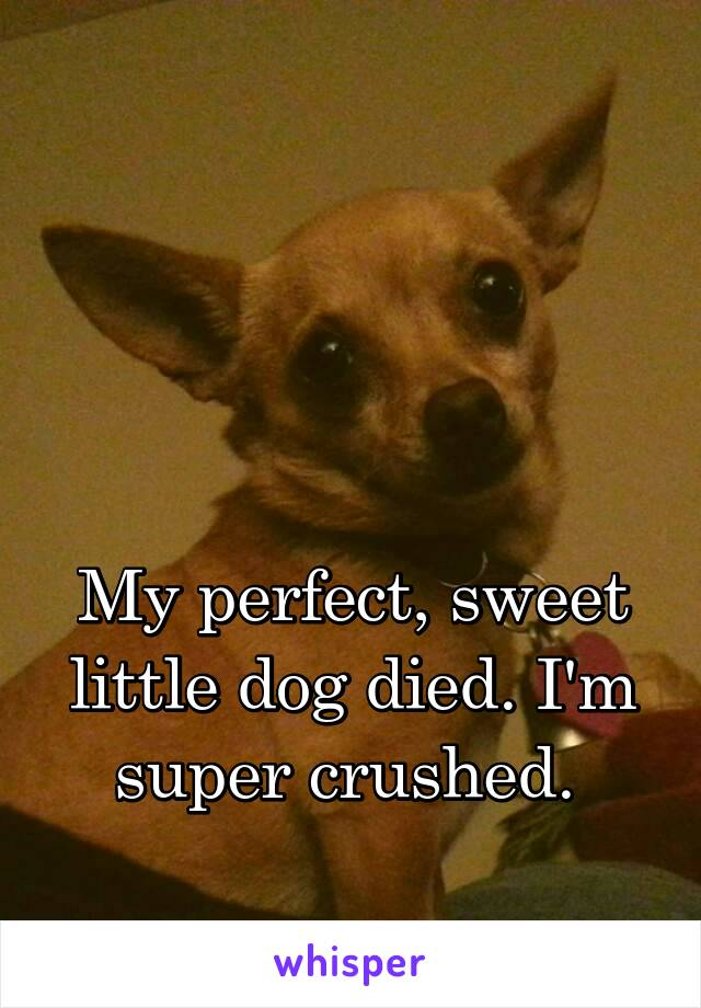 My perfect, sweet little dog died. I'm super crushed.