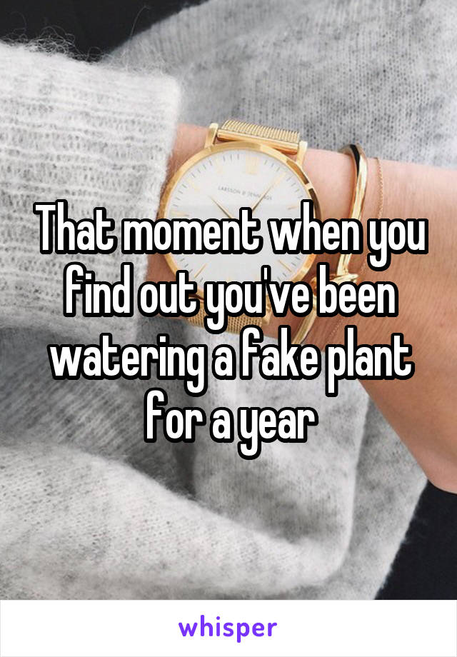 That moment when you find out you've been watering a fake plant for a year