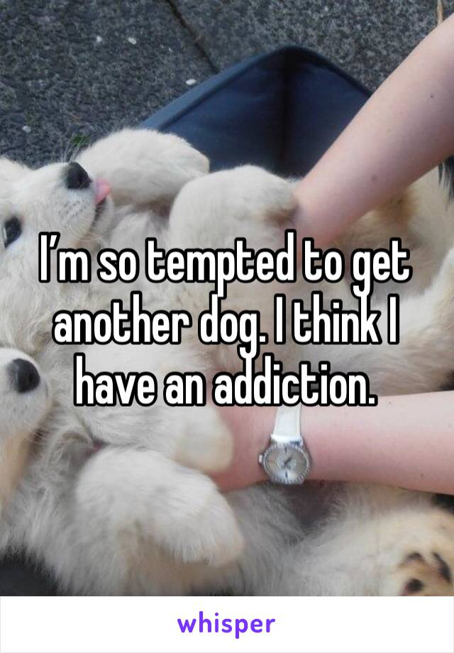 I'm so tempted to get another dog. I think I have an addiction.