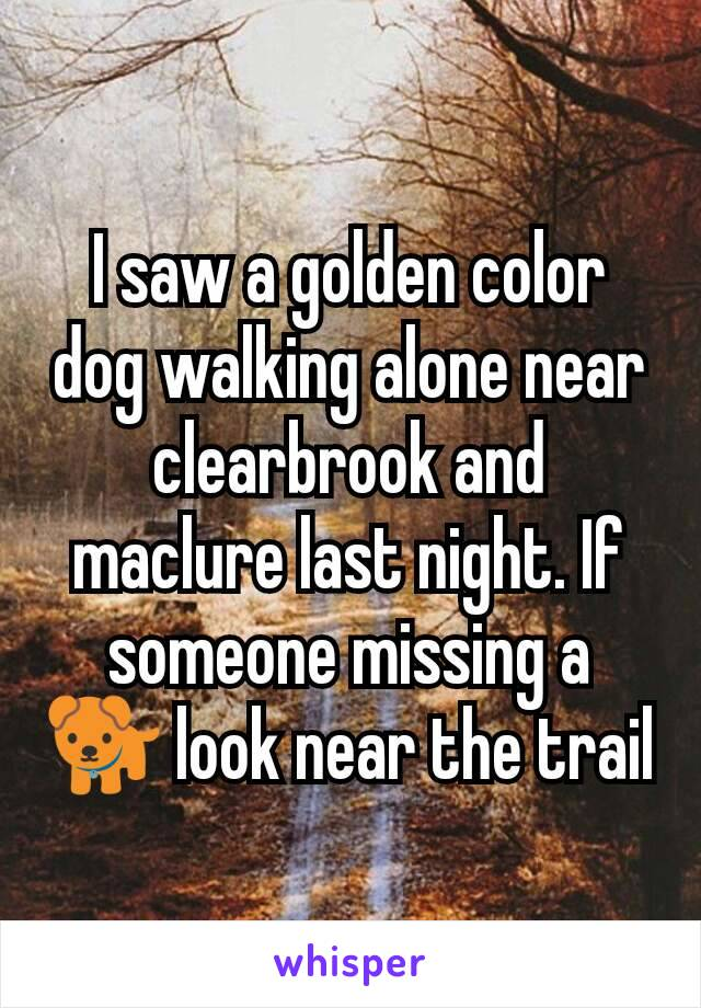 I saw a golden color dog walking alone near clearbrook and maclure last night. If someone missing a 🐕 look near the trail