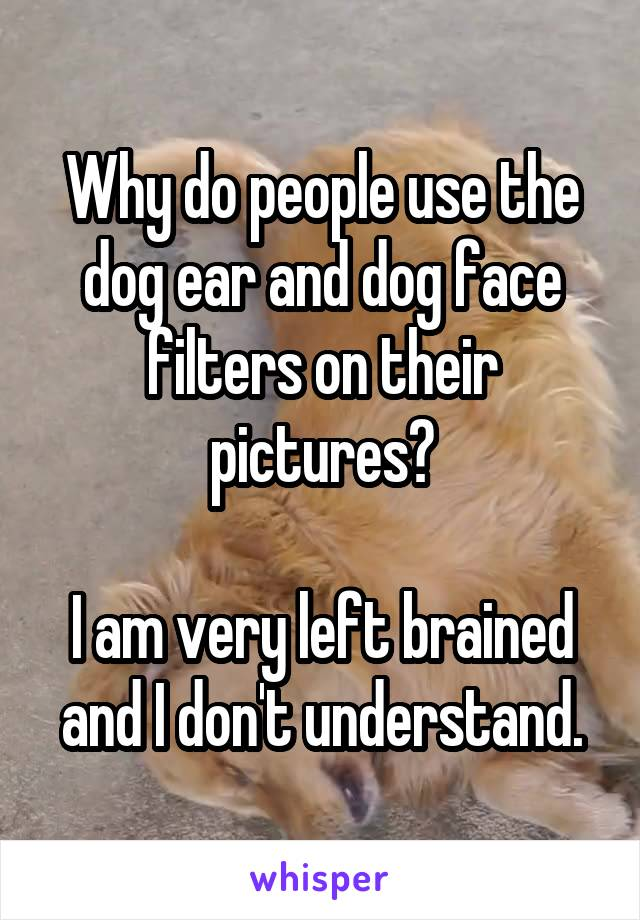 Why do people use the dog ear and dog face filters on their pictures?  I am very left brained and I don't understand.