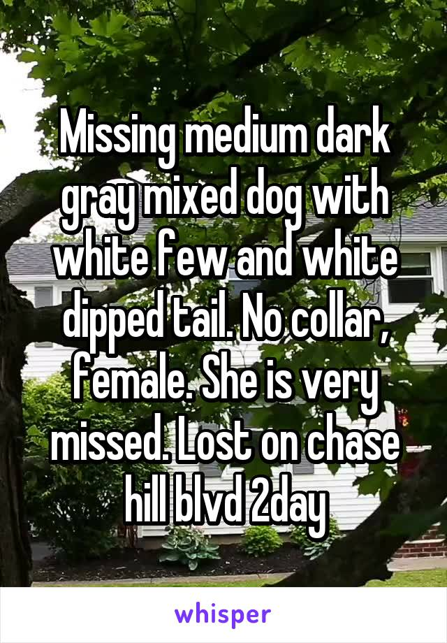 Missing medium dark gray mixed dog with white few and white dipped tail. No collar, female. She is very missed. Lost on chase hill blvd 2day