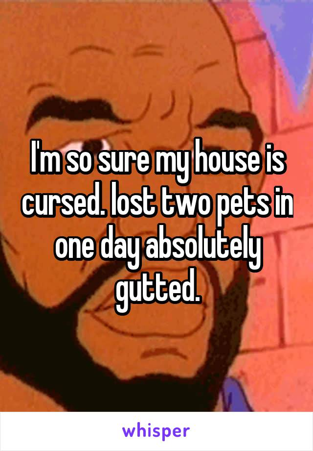 I'm so sure my house is cursed. lost two pets in one day absolutely gutted.