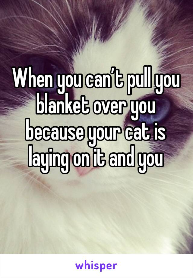 When you can't pull you blanket over you because your cat is laying on it and you