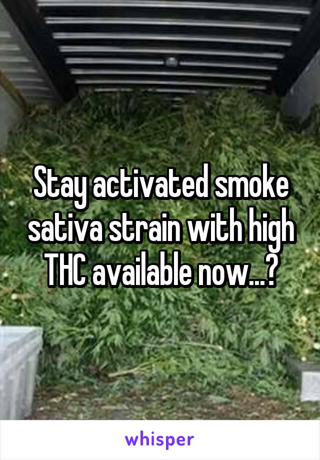 Stay activated smoke sativa strain with high THC available now...?