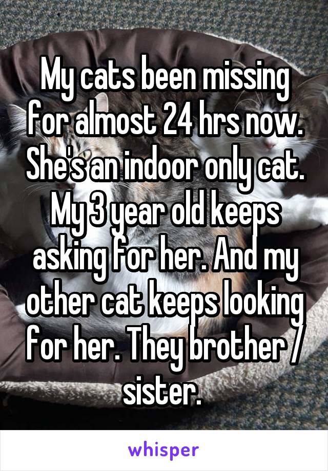 My cats been missing for almost 24 hrs now. She's an indoor only cat. My 3 year old keeps asking for her. And my other cat keeps looking for her. They brother / sister.