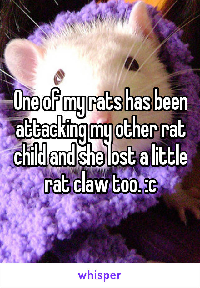 One of my rats has been attacking my other rat child and she lost a little rat claw too. :c