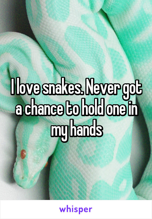 I love snakes. Never got a chance to hold one in my hands