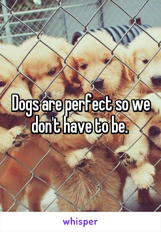 Dogs are perfect so we don't have to be.