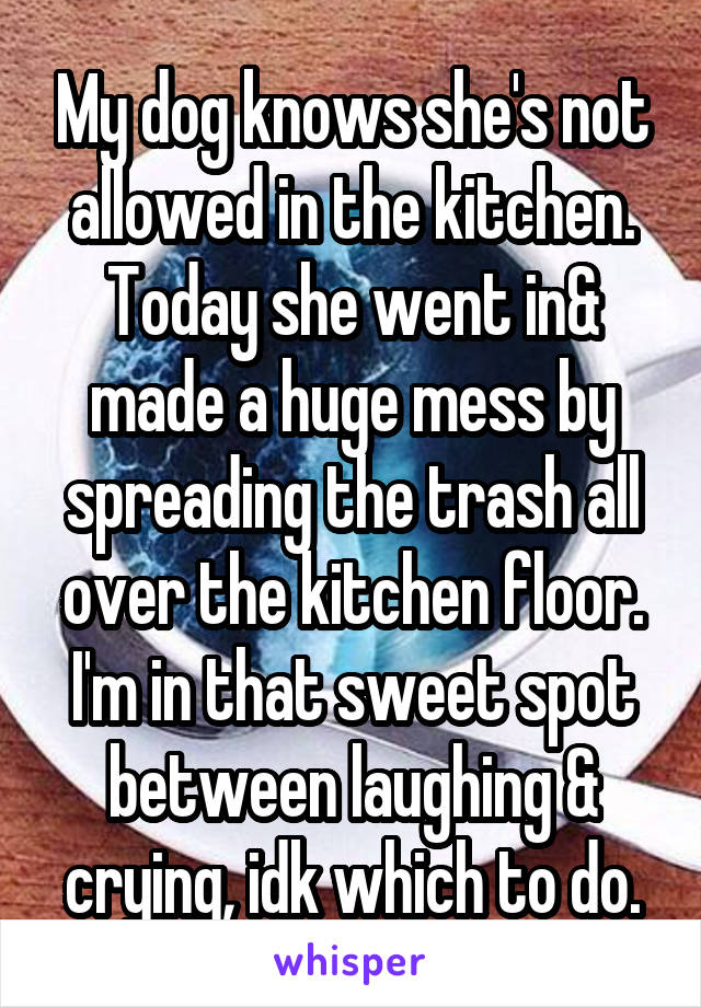 My dog knows she's not allowed in the kitchen. Today she went in& made a huge mess by spreading the trash all over the kitchen floor. I'm in that sweet spot between laughing & crying, idk which to do.