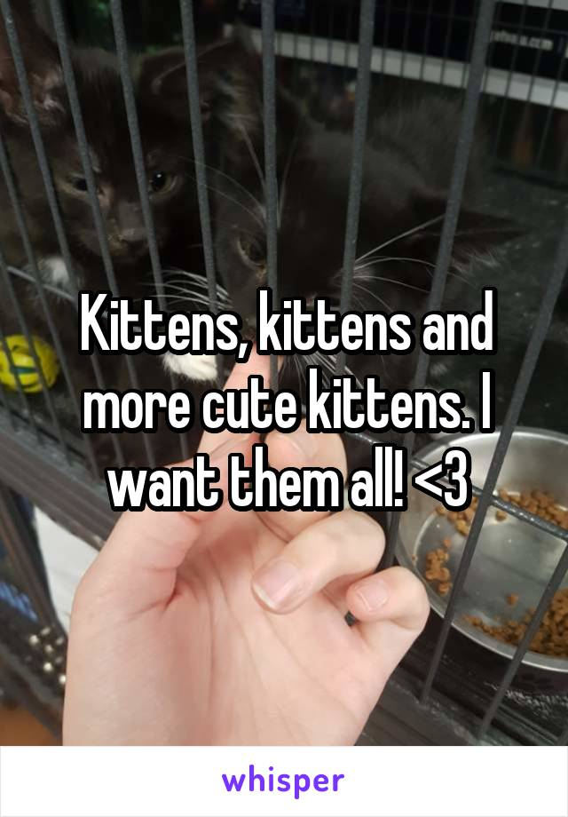 Kittens, kittens and more cute kittens. I want them all! <3