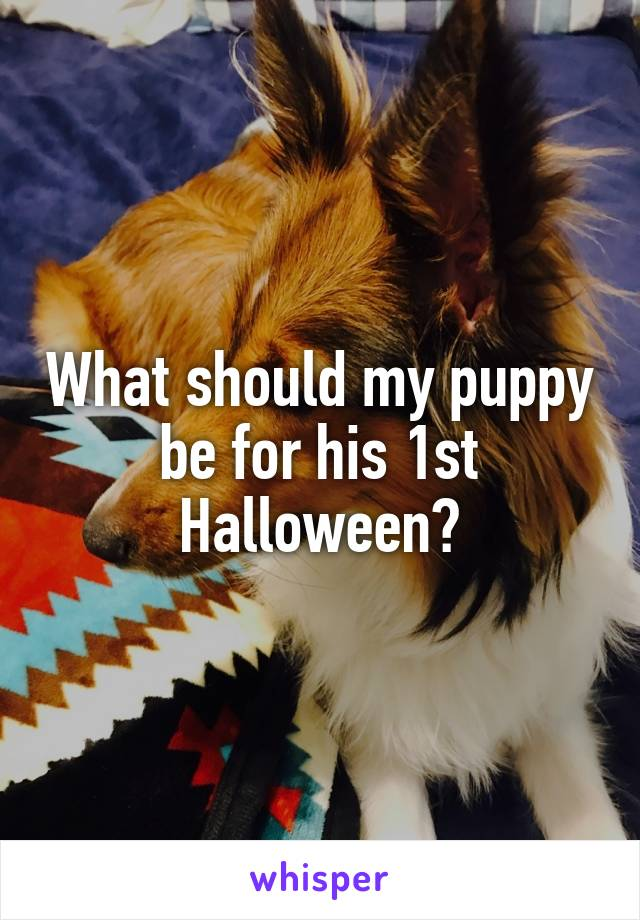 What should my puppy be for his 1st Halloween?