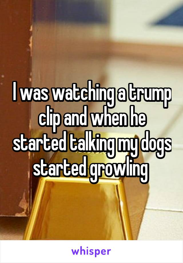 I was watching a trump clip and when he started talking my dogs started growling