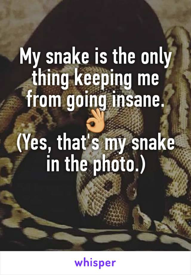 My snake is the only thing keeping me from going insane. 👌 (Yes, that's my snake in the photo.)