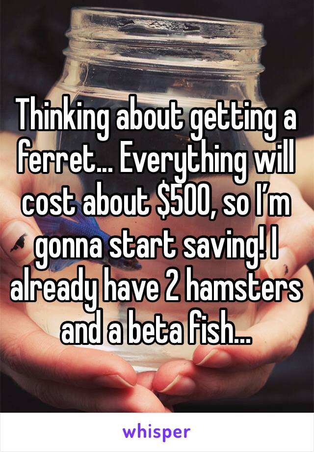 Thinking about getting a ferret... Everything will cost about $500, so I'm gonna start saving! I already have 2 hamsters and a beta fish...