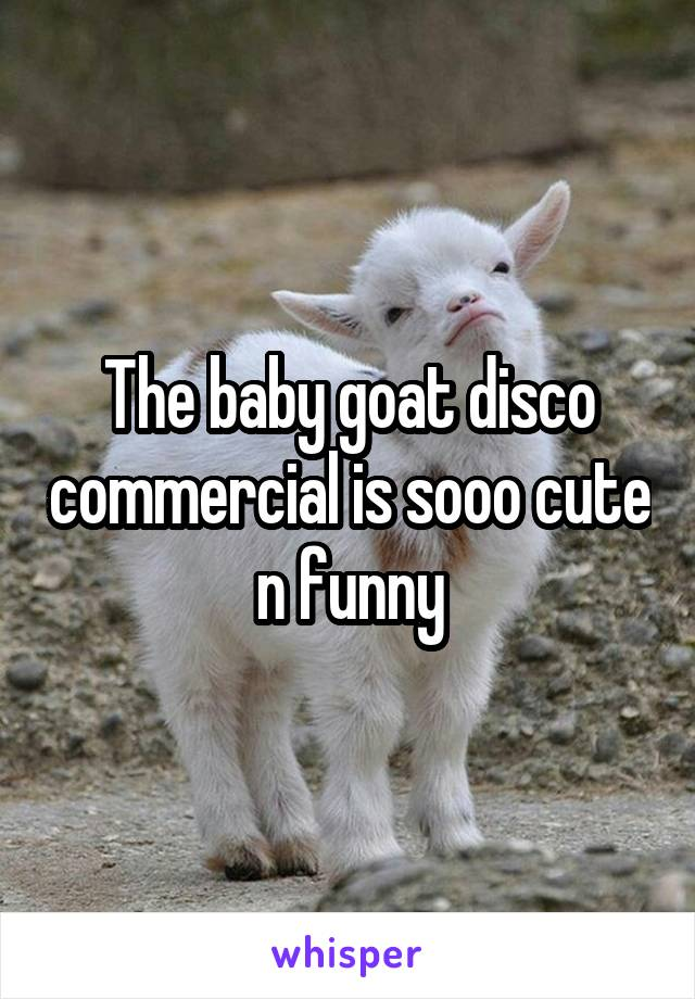 The baby goat disco commercial is sooo cute n funny