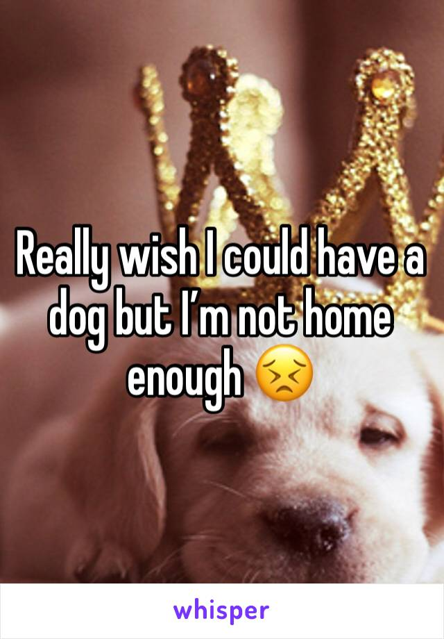 Really wish I could have a dog but I'm not home enough 😣