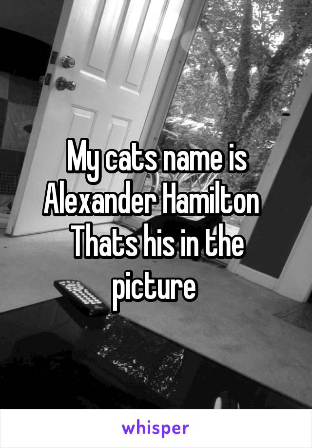 My cats name is Alexander Hamilton   Thats his in the picture