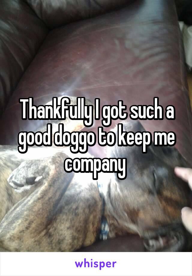 Thankfully I got such a good doggo to keep me company