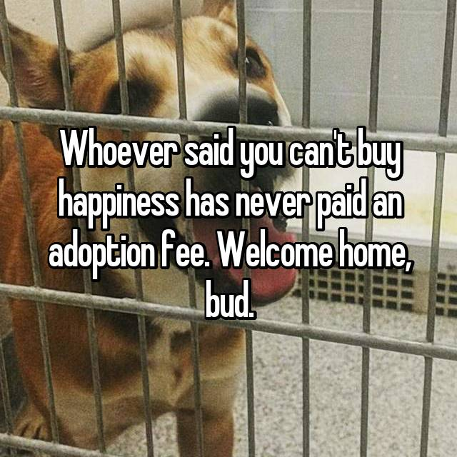 Whoever said you can't buy happiness has never paid an adoption fee. Welcome home, bud.