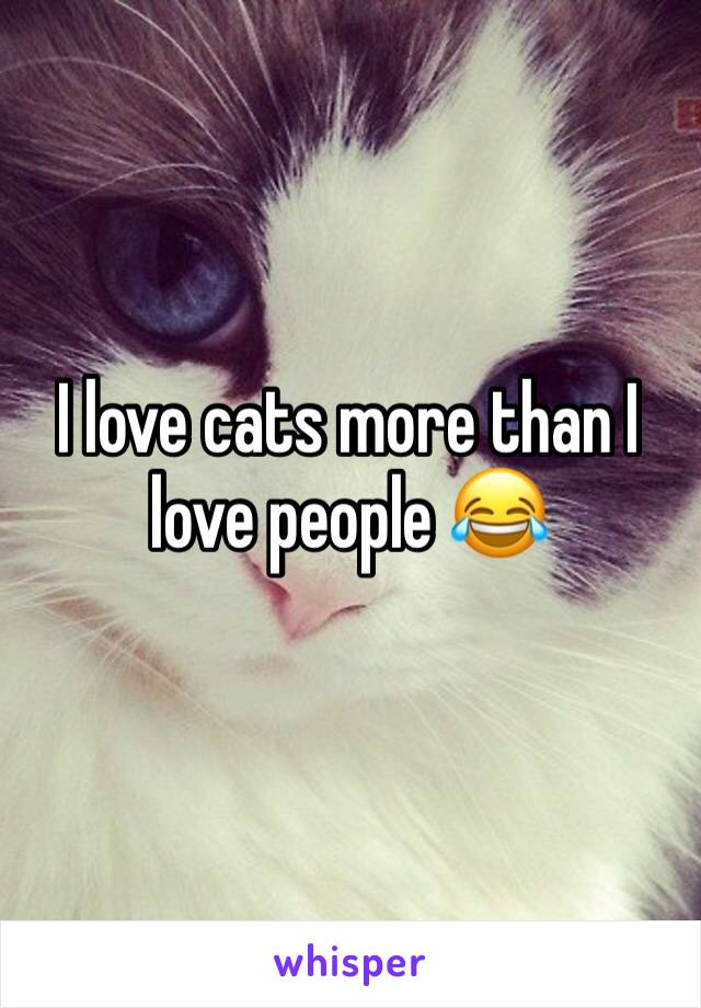 I love cats more than I love people 😂