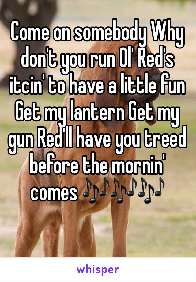 Come on somebody Why don't you run Ol' Red's itcin' to have a little fun Get my lantern Get my gun Red'll have you treed before the mornin' comes 🎶🎶🎶