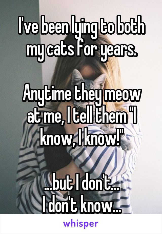 "I've been lying to both my cats for years.  Anytime they meow at me, I tell them ""I know, I know!""  ...but I don't... I don't know..."